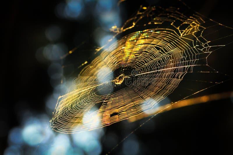El web con una araña brilla en haces del sol imágenes de archivo libres de regalías