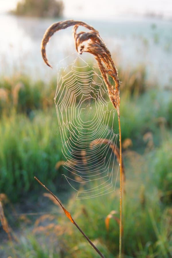 El web del ` s de la araña imagen de archivo