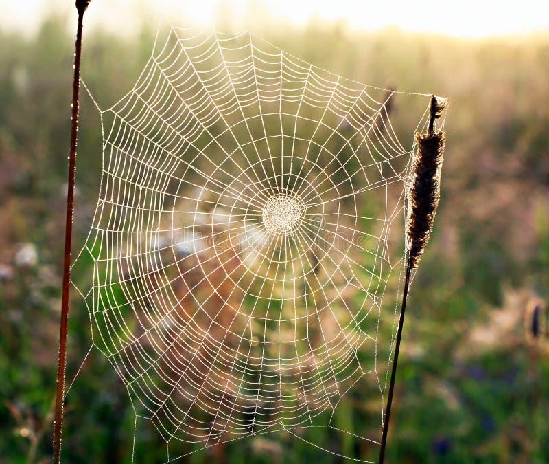 El web tejió por una araña en forma de un espiral en un prado del verano imágenes de archivo libres de regalías