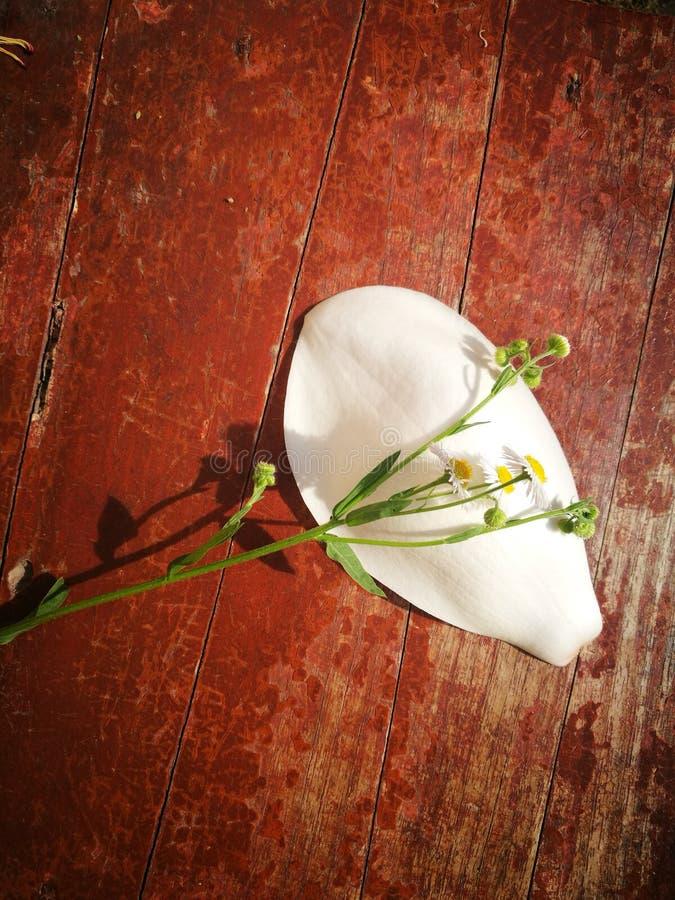 El Wildflower y la magnolia florecen la mentira en el tablero de madera imagenes de archivo