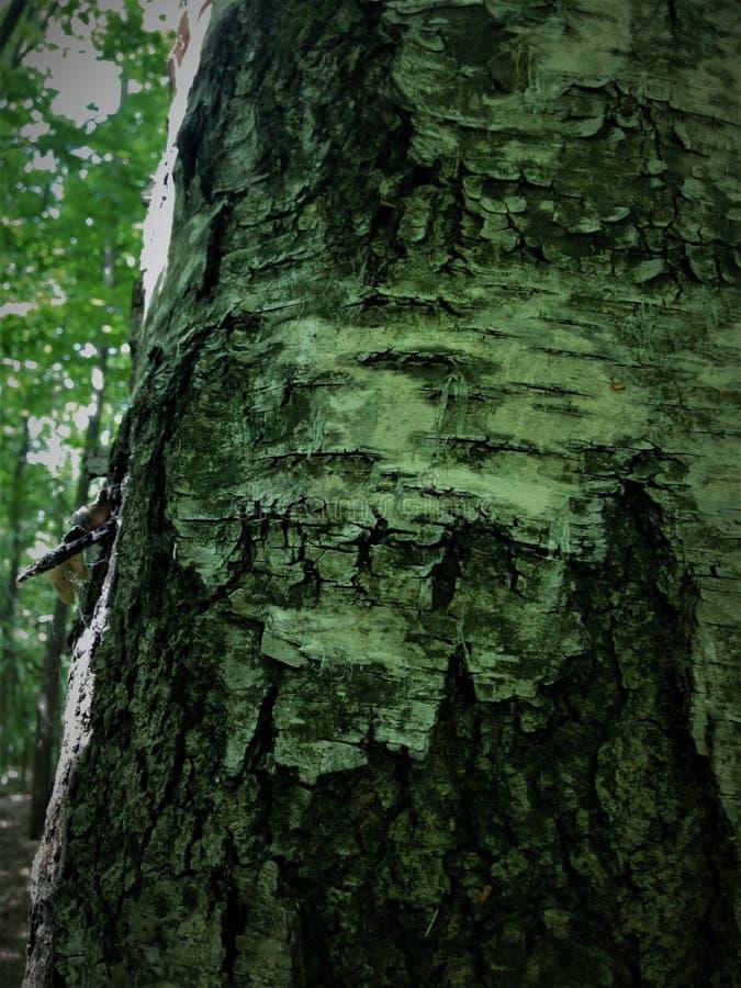 El woodcarver es la naturaleza sí mismo, dibuja caras terribles de monstruos foto de archivo