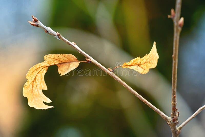 El yin y las hojas de otoño de la muestra de yang fotos de archivo