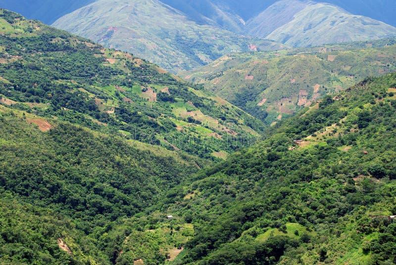 El Yungas, Bolivia imagen de archivo