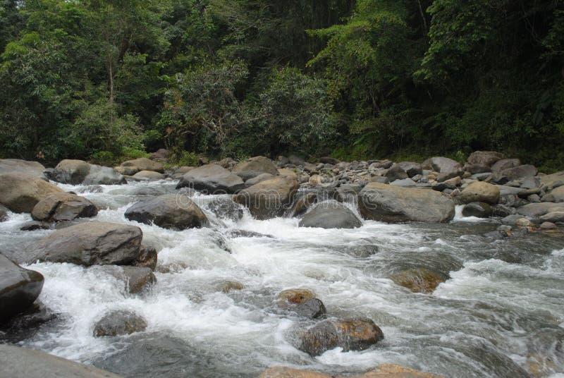 EL Yunque στοκ εικόνα