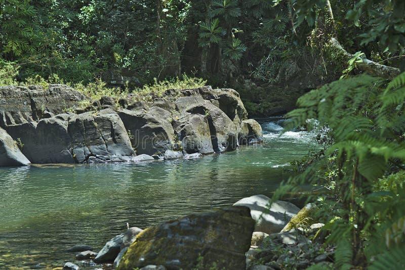 El Yunque creeks, Puerto Rico. Area called La Barrigona in one of the creeks running down from the high areas of El Yunque rain forest, Río Grande Puerto stock photos