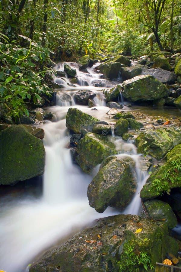 El Yunque river stream stock photo