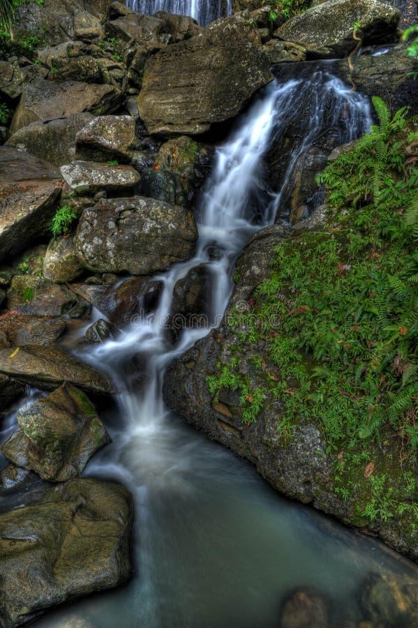 El Yunque Waterfall royalty free stock photos