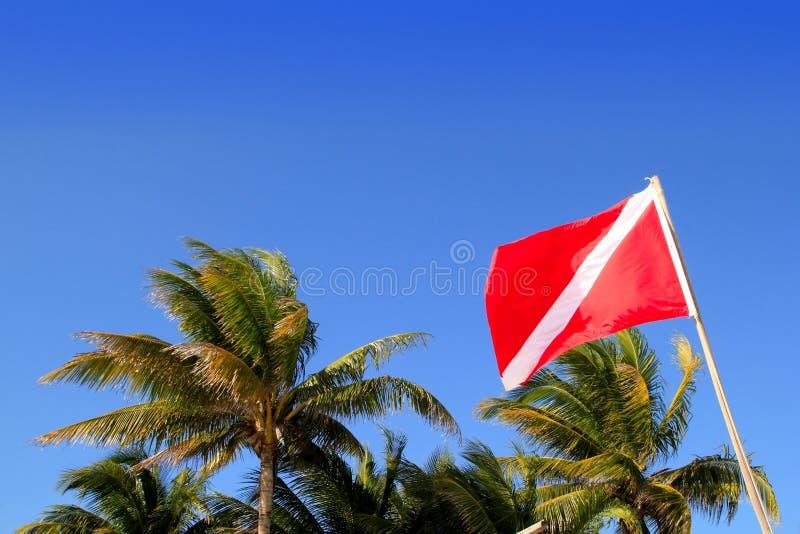 El zambullidor de equipo de submarinismo abajo señala el cielo azul de las palmeras por medio de una bandera tropicales fotos de archivo