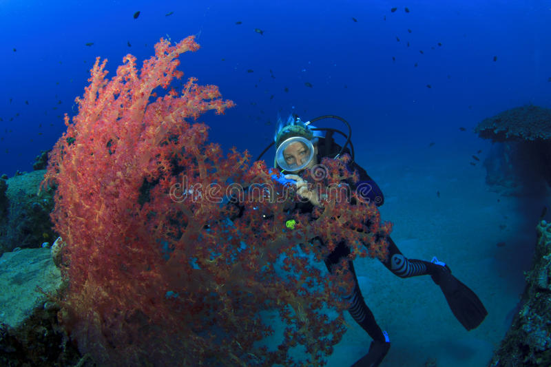 El zambullidor de equipo de submarinismo explora el filón coralino fotografía de archivo libre de regalías