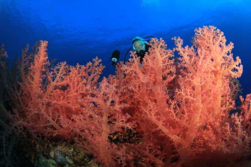 El zambullidor de equipo de submarinismo explora el filón coralino hermoso fotografía de archivo libre de regalías
