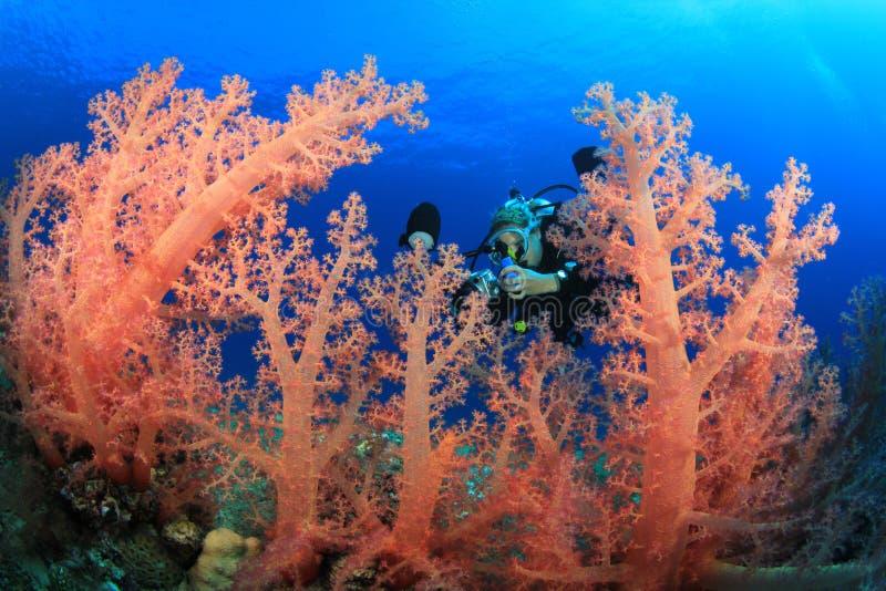 El zambullidor de equipo de submarinismo explora el filón coralino hermoso foto de archivo