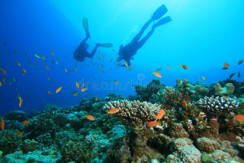 El zambullidor de equipo de submarinismo explora el filón coralino hermoso fotografía de archivo