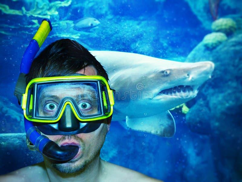 El zambullirse con el tiburón imagen de archivo