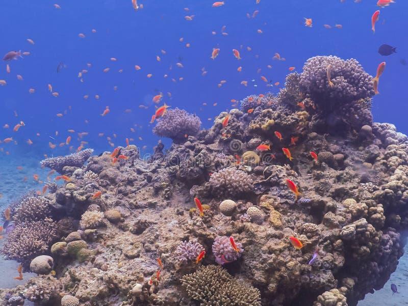 El zambullirse en mundo subacuático del arrecife de coral fotos de archivo