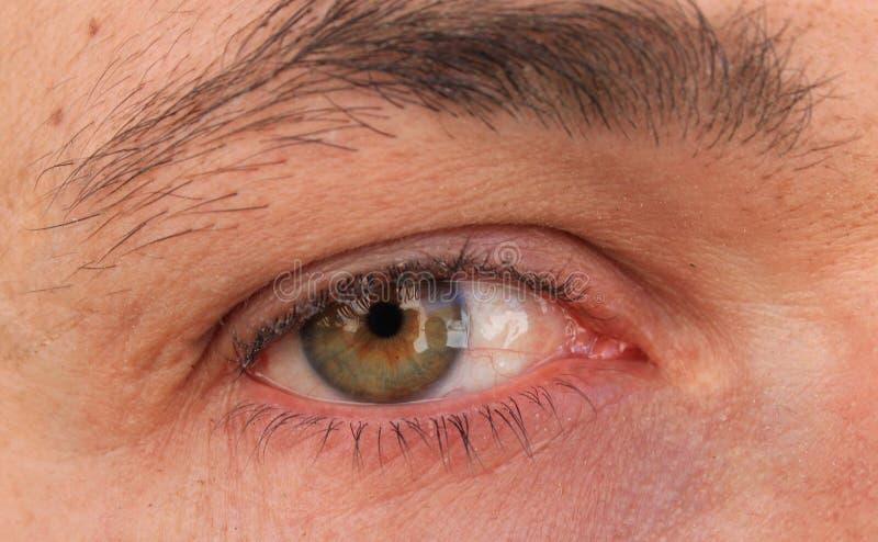 Ela Most Beautiful Close Up royalty free stock images