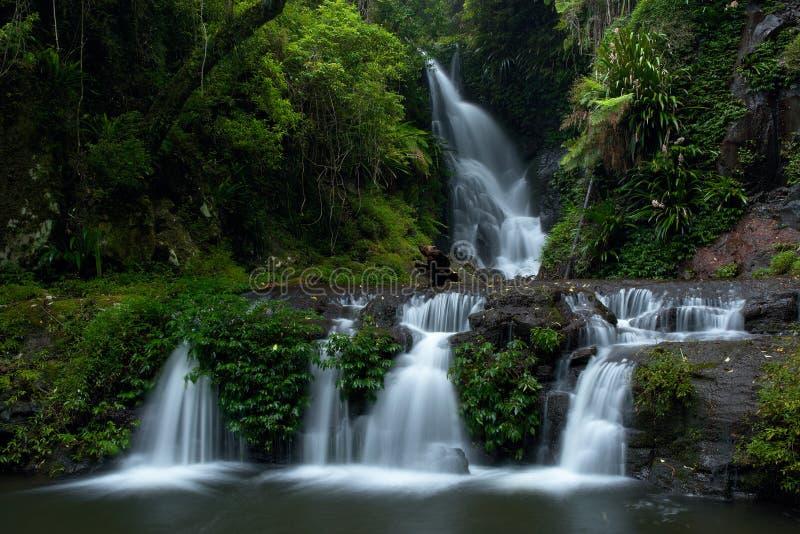 Elabana fällt Lamington Nationalpark lizenzfreies stockbild