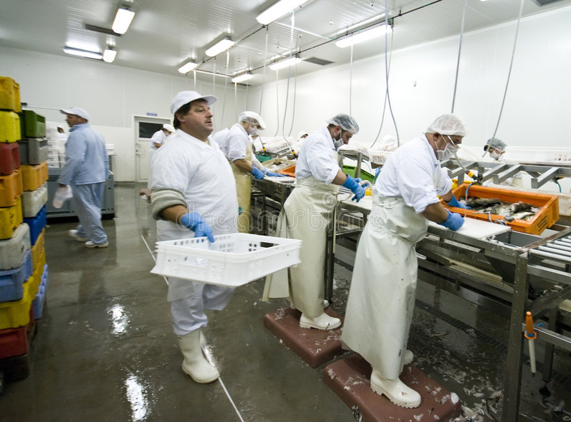 Elaborare dei pesci immagine stock