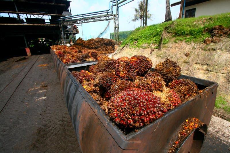 Elaborare dell'olio di palma immagine stock