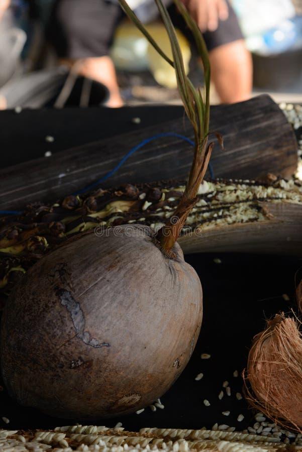 Elaborazione dello zucchero del cocco in Tailandia immagine stock libera da diritti