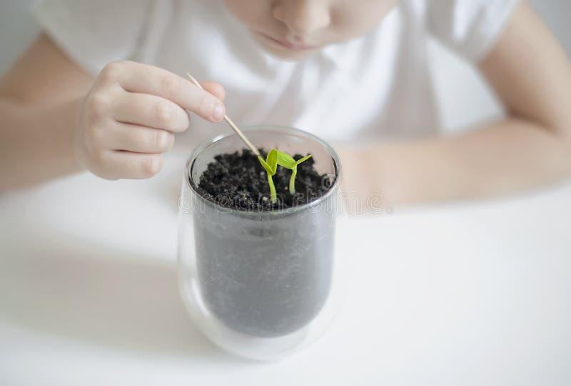 Elaborazione e cura del suolo Il piccolo bambino coltiva la terra intorno alla giovane piantina verde Allentamento della terra immagini stock libere da diritti