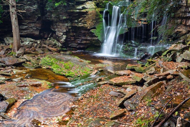 Elakaladalingen - Canaan Valley, West-Virginia stock fotografie