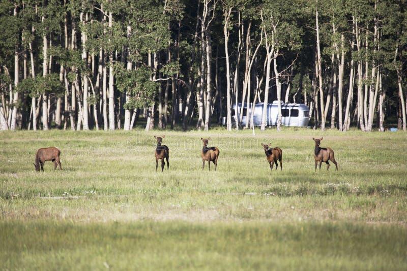 Elanden en Luchtstroom op Hastings Mesa dichtbij Ridgway, Colorado, de V.S. stock afbeeldingen
