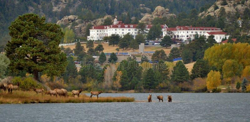 Elanden in het meer royalty-vrije stock fotografie