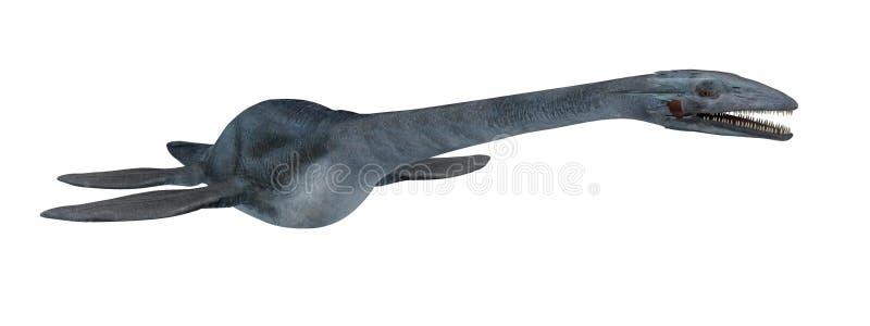 Elasmosaurus isolado do dinossauro da água no branco ilustração royalty free