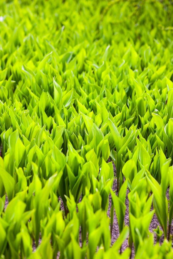 Elasticitet för gröna växter till solen arkivfoton