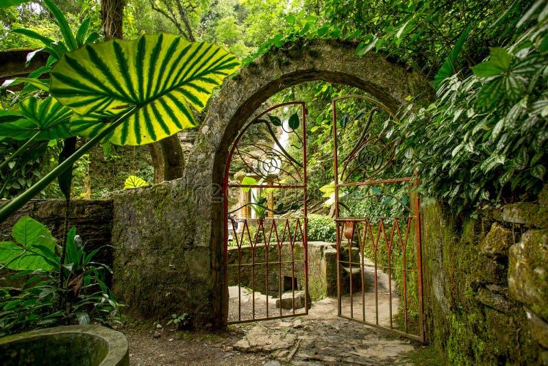 Żelazna brama na junge ścieżce obrazy royalty free