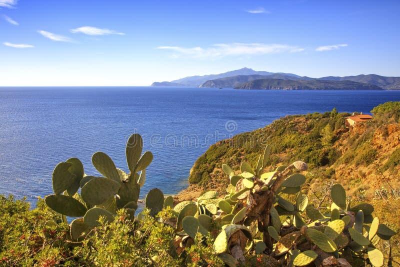 Elba wyspa, kaktusowy indyjskiej figi opuntia, brzegowy widok Capoliveri Tu fotografia stock