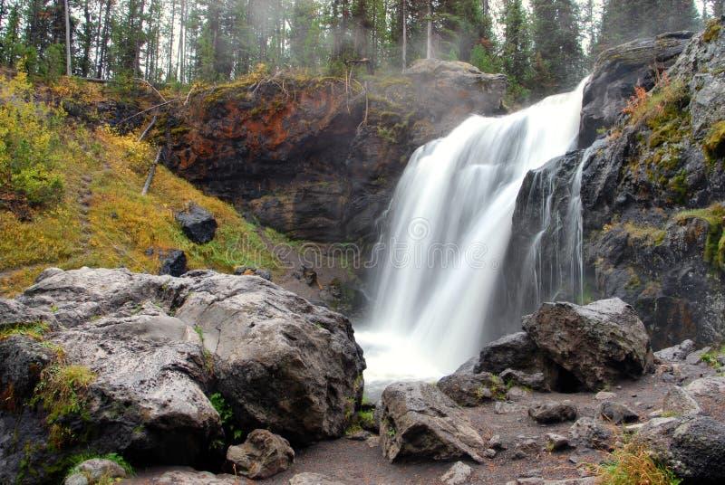 Elch fällt in Yellowstone Nationalpark stockfoto