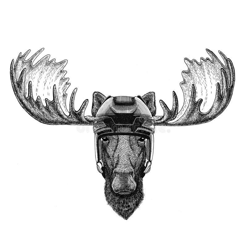 Elche, Hockeysturzhelm Sport-Tierwintersport Hockeysport des wilden Tieres des Elche Hockeybildes tragender stock abbildung