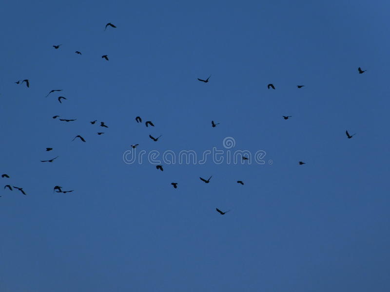 Elche, Vögel auf dem Himmel lizenzfreies stockfoto