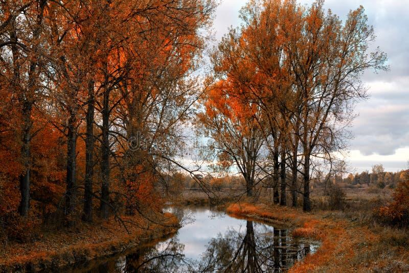 Elchfluß in Herbst 2 stockfoto