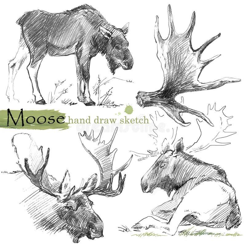 Elchskizze Illustration des wilden Tieres lizenzfreie abbildung