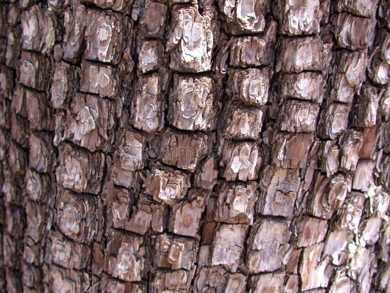 Download Elden Bark stock photo. Image of bark, forest, juniper, desert - 89754