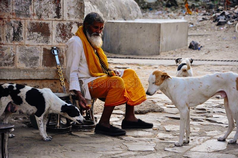 A elder feeds his dogs at the Hanuman Temple near Jaipur, India. royalty free stock photos