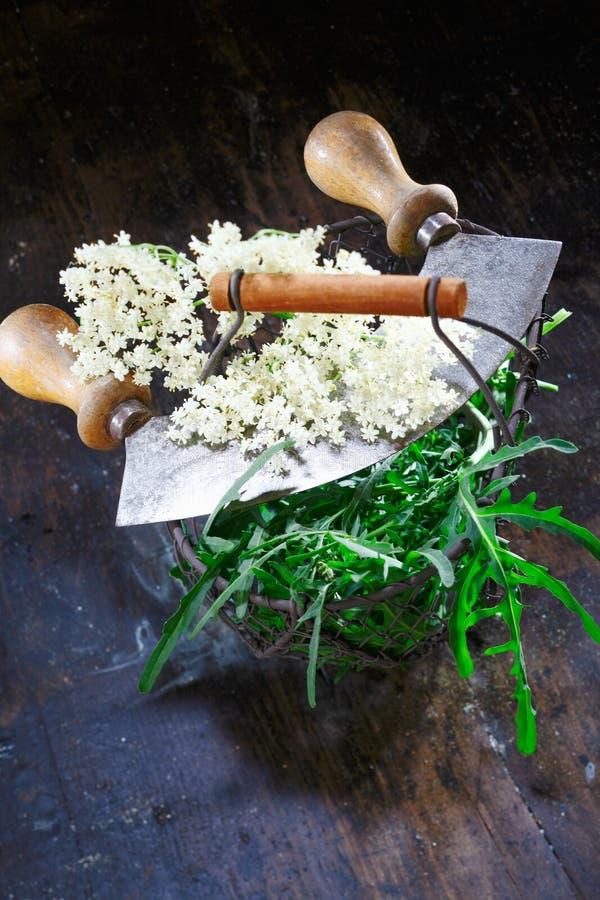 Elder Flowering Stock Images