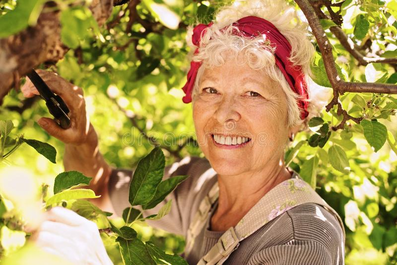 Elder woman working in her farm smiling royalty free stock photo