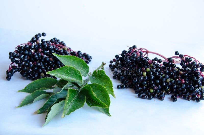 Elderberry на белой предпосылке стоковая фотография