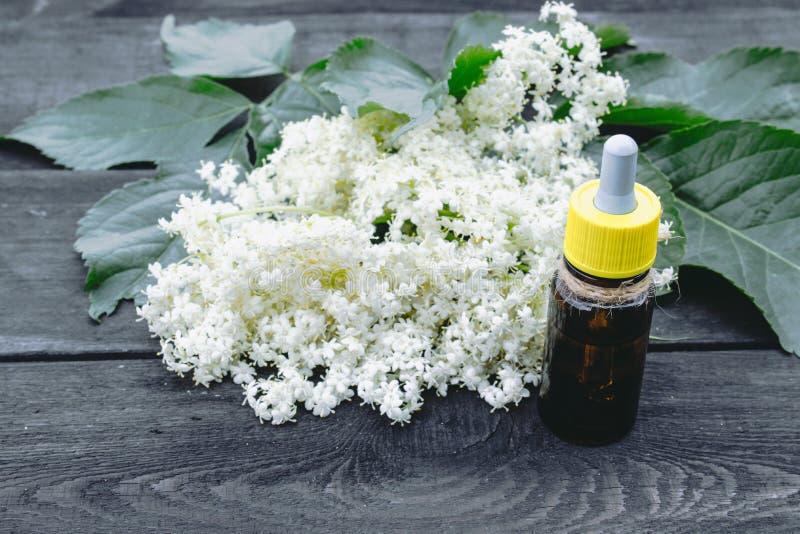 Elderberry butelkujący olej, świezi kwiaty zdjęcia royalty free