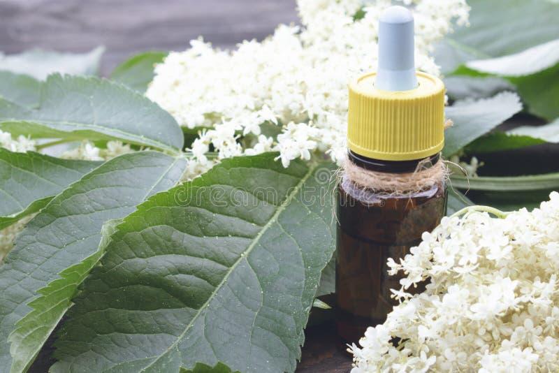 Elderberry butelkujący olej, świezi kwiaty zdjęcie stock
