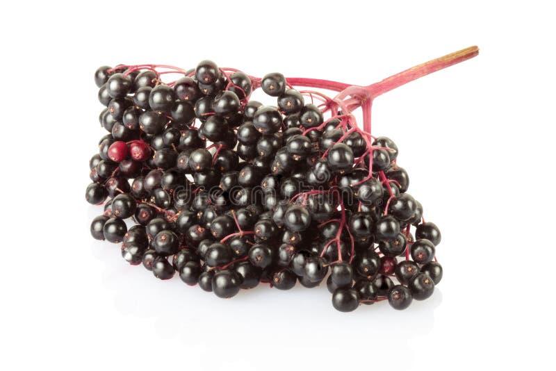 Elderberry isolated royalty free stock photography