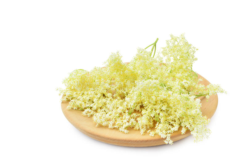 Elderflower kwitnie na bielu obraz royalty free