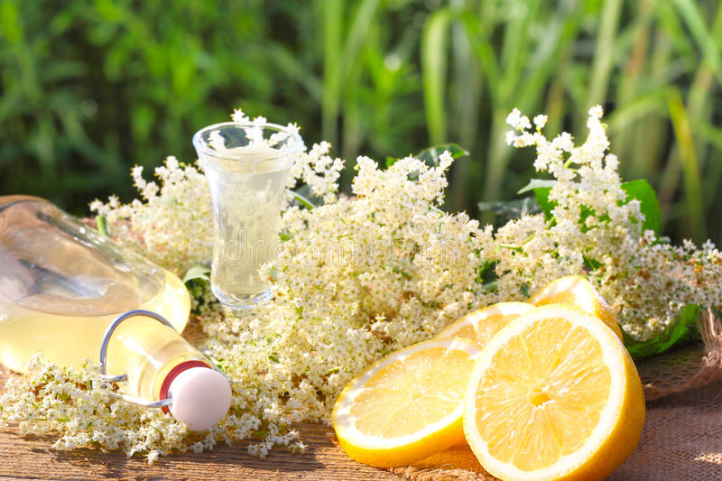 Elderflower liqueur, tasting. With fresh elderflower and lemon stock image