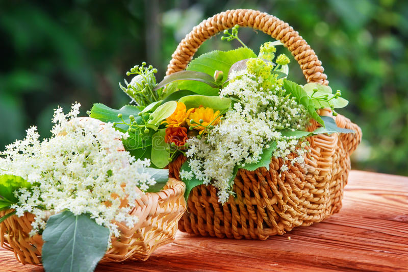 Elderflower and other medicinal herbs. Collected elderflower and other medicinal herbs stock photos