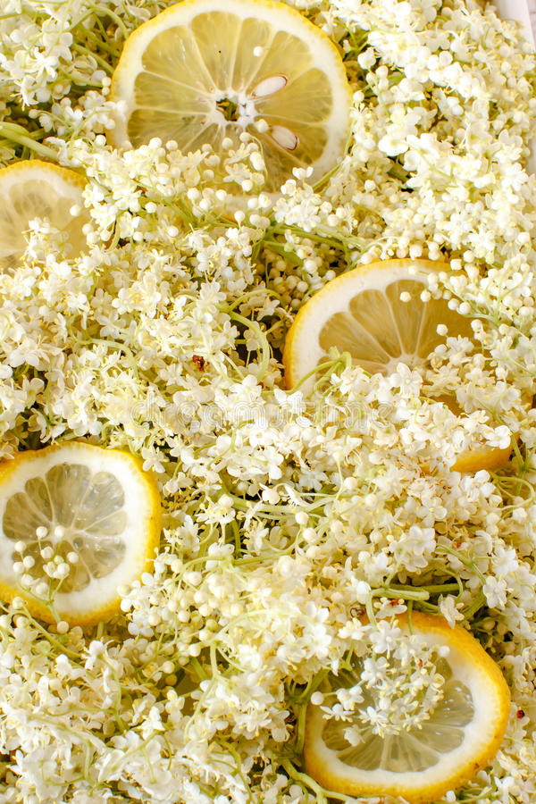 Elderflower and slices of lemon background stock photo