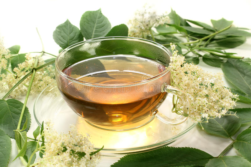 Elderflower tea. A cup of elderflower tea with fresh flowers royalty free stock photo
