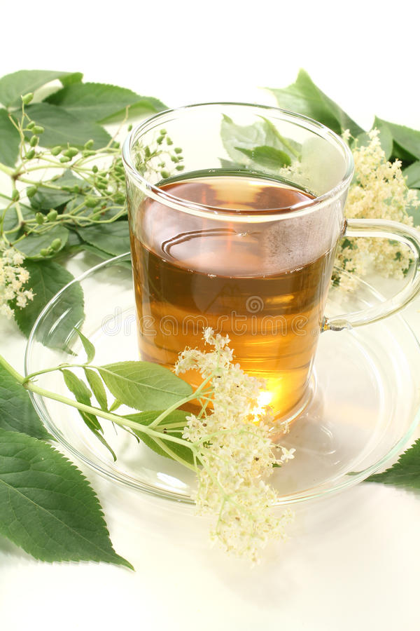 Elderflower tea. Fresh hot elderflower tea with elder flowers and leaves stock photos